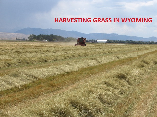 Harvesting Grass in Wyoming