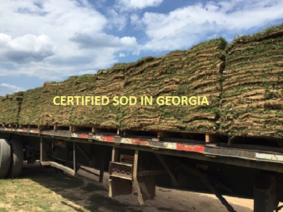 Truckload of Certified Sod