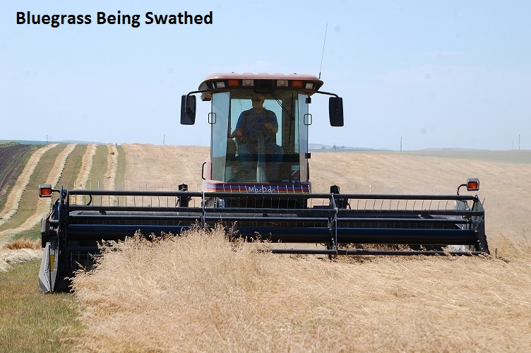 Idaho - Kentucky Bluegrass Being Swathed