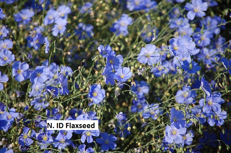 North Idaho Flaxseed
